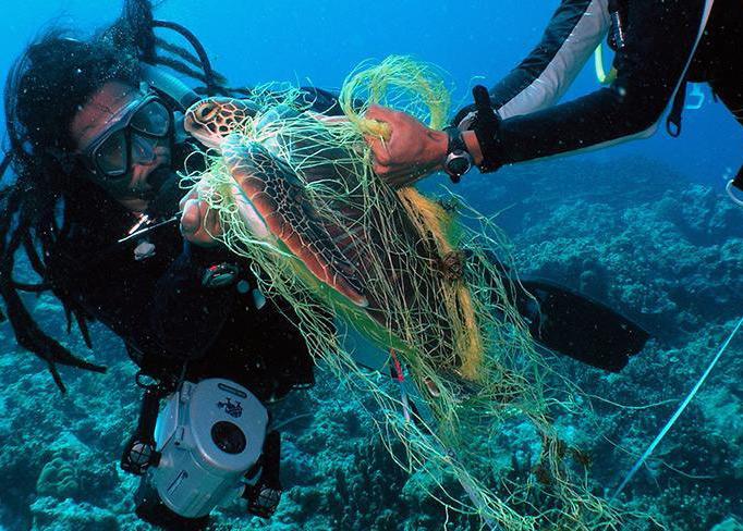 Healthy Seas Nonprofit