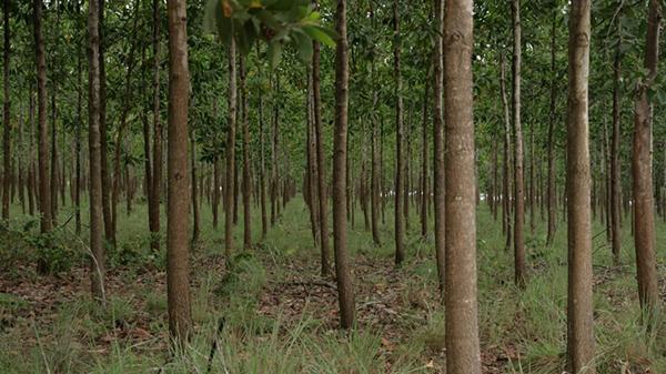 Treedomweb